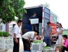 长春部队学校企事业单位食堂蔬菜肉配送正规增值税发票