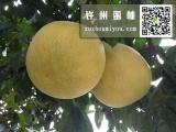 许州蜜柚-红肉蜜柚价格咨询-红肉蜜柚批发网站