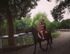 杭州马会俱乐部 骑马 学马