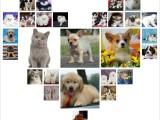 四川达州出售纯种哈士奇宠物狗狗幼犬