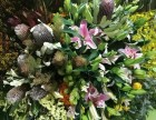 2018 FLS--西部可信赖花卉园艺展