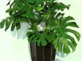 广州花木租花 花木植物出租 花木植物租赁 广州植物出租