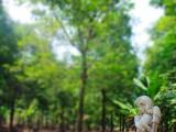 廣州寵物墓地 寵物墓園 寵物陵園 狗狗墓地