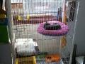 全新1.3白色3层猫笼