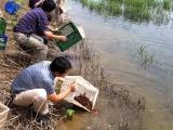 武汉虾龙水产养殖开发有限公司积极创建淡水小龙虾养殖特色品牌