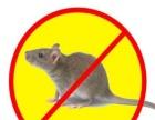 沈阳专业灭鼠灭老鼠 绝杀蟑螂 除虫除蚁 安全高效