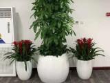 怀柔专业绿植租摆,绿化养护