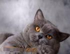 king宝的孩子猫舍猫咪全部出售