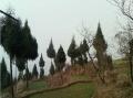 四川省巴中市巴州区平梁乡70亩旱地出租