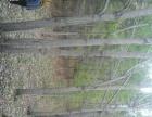 哈尔滨市宾县附近有180亩林地低价出租