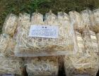 芽苗菜微工厂,一个一本万利的好项目,赚钱就是王道