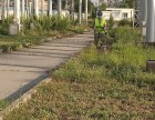 天津草坪养护 草坪修剪 除杂草铺草坪 打药