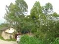 沙埔镇上雷小学后面 厂房 2600平米