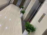 朝阳办公室绿植租赁,花卉租赁