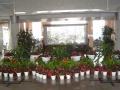 专业专注办公室植物租摆、绿植租赁。高品质服务!