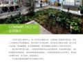 北京绿植租摆,绿植 办公室绿植出租 北京花卉租摆绿