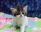 加菲猫,dd喜欢得联系我