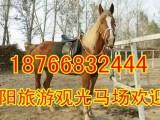 湖南去哪里买骑乘马 骑乘马多少钱一匹