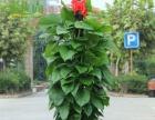 出售各种花卉 花架 租摆 营养土