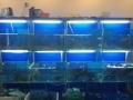 定制各种鱼缸饭店鱼缸海鲜缸家庭鱼缸超白鱼缸乌龟缸制冷空调安装