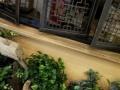 南通专业绿植租摆,花卉销售,开业花篮,婚车婚庆,绿化养护