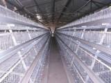 养鸡设备的功能有哪些