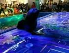 佛山周边租赁海狮表演 美人鱼表演动物展览百鸟展马戏团表演