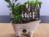 复古 迷你个性创意欧式陶瓷花盆  多肉植物盆栽花盆 批发