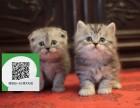 烟台在哪里卖健康纯种宠物猫 烟台哪里出售加菲猫