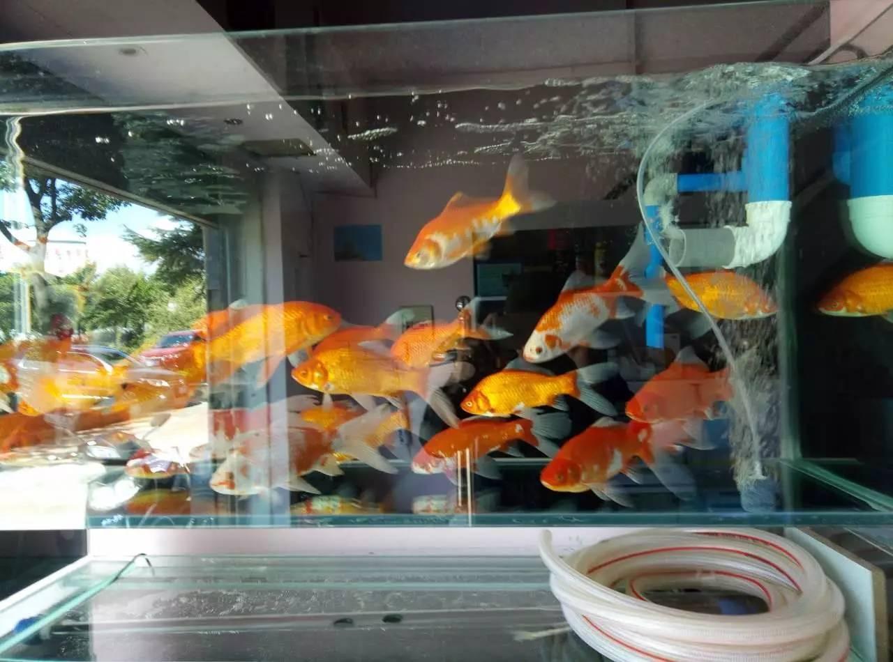 专业鱼缸保洁清洗 鱼缸专业造景