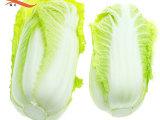 强丰基地直供新鲜蔬菜 大白菜