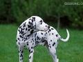宠物寄养价格小型犬20,中型犬30,宠物洗澡另算