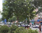 L燕儿岛路主路上400平行业无限制的店铺出租