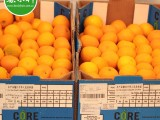 新鲜水果南非进口供应 Nova柑饮品榨汁专用广州江南水果市场