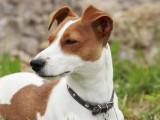 十堰专业繁殖基地出售极品阿拉斯加幼犬 健康质保签署协议