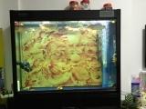 森森牌鱼缸新缸