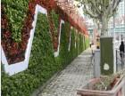 兰州植物墙 仿真植物墙