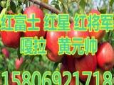 山东红富士苹果价格      16F