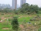 茂名米粮开发区 出售一块地皮 150平方、20万 开发商城.