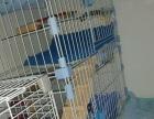 三层超大猫笼 笼子