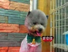 三亚乐趣宠物店 专业宠物洗澡 美容