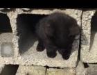 猫咪求好心人收养