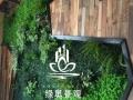 杭州鲜花盆景租赁 办公绿植养护 植物墙微型景观制作