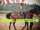山东大规模养马场纯白色的马多少钱一匹 伊犁马价格