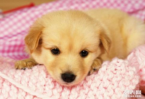 东莞宠物托运中心 代办宠物检疫证18666880523