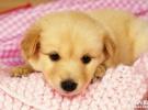 东莞宠物托运中心 代办宠物检疫证