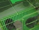 本店批发零售兔粮,兔兔、兔笼、仓鼠粮、仓鼠、仓鼠笼、鹦鹉