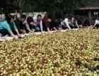 灵宝红丰果业,出售古树寿枣