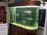 定做鱼缸 海鲜池 安装各种鱼缸 鱼缸清洗维护搬运