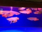 上海市内上门清洗鱼缸